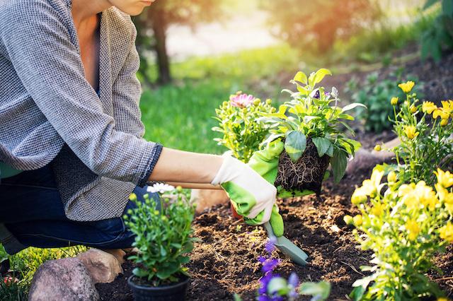 Preparation Tips for a Healthy Summer Garden